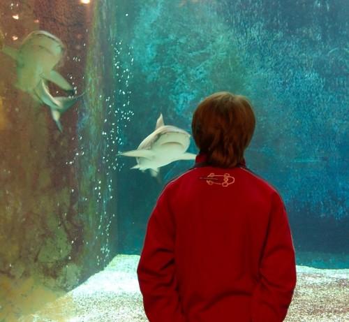 Aquarium des requins_2.jpg